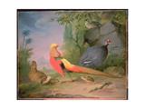 Wild Fowl Giclee Print by Aert Schouman