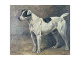 A Jack Russell, 1891 Giclee Print by John Emms