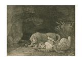Tygers at Play, Engraved by the Artist, Pub. 1789 Giclee Print by George Stubbs