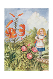 Tiger Lily, from 'Through the Looking Glass' by Lewis Carroll (1832-98) Giclee Print by John Tenniel