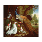 A Peacock in a Classical Landscape, 1719 Giclee Print by Pieter Casteels