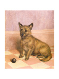 Waiting to Play, a Cairn Terrier with a Ball Giclee Print by Frank Paton