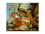 A Peacock on a Decorative Urn Giclee Print by Melchior de Hondecoeter