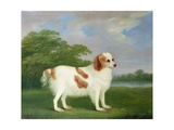 Spaniel in a Landscape, 1789 Giclee Print by John Nott Sartorius