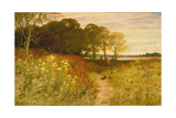Landscape with Wild Flowers and Rabbits Giclee Print by Robert Collinson