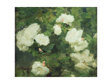 White Roses Giclee Print by Frank Bramley