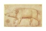 A Wild Boar Giclée-tryk af Antonio Pisanello