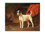 Fox Terrier in a Stable Giclee Print by George Wright