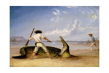 T.Baines and C.Humphrey Killing an Alligator on Horse Shoe Flats Giclee Print by Thomas Baines