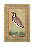 Indian Lapwing, C.1800 Giclee Print by Ustad Mansur