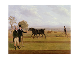 Sir Charles Morgan at the Castleton Ploughing Match, 1845 Giclee Print by James Flewitt Mullock