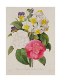 Camellias, Narcissus and Pansies, Engraved by Victor, Pub. 1827 Giclee Print by Pierre-Joseph Redouté