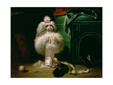 A Dog of the Havannah Breed, 1768 Giclee Print by Jean Jacques Bachelier