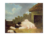 Sow with Piglets in the Sty Giclee Print by John Frederick Herring Jnr