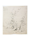 Study of Weeds, Kirkstall, 1803 Giclee Print by John Sell Cotman