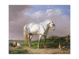 Grey Stallion Giclee Print by Eugene Joseph Verboeckhoven