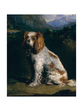 A King Charles Spaniel Giclee Print by Philip Reinagle