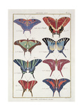 Butterflies from 'Histoire Naturelle Des Insectes' by M. Olivier Giclee Print by Robert Benard
