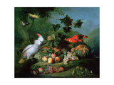 Fruit and Birds Giclee Print by Jakob Bogdani Or Bogdany