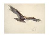 Eagle in Flight, 1873 Giclee Print by Joseph Wolf