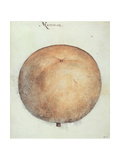Mammea Apple Giclee Print by John White