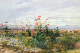 Wildflowers with a View of Dublin Dunleary Giclee Print by Andrew Nicholl