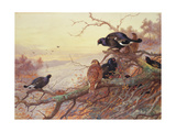 Blackgame in Winter Giclee Print by Archibald Thorburn