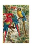 """Macaws, Plate from """"Brehms Tierleben: Allgemeine Kunde Des Tierreichs"""", Vol.5, P.60, Published by… Giclee Print by German School"""