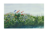 Poppies by a Stream Giclee Print by Andrew Nicholl