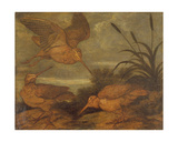 Woodcock at Dusk, C.1676 Giclee Print by Francis Barlow
