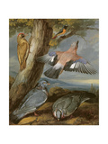 Jay, Green Woodpecker, Pigeons and Redstart, C.1650 Reproduction procédé giclée par Francis Barlow