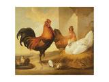Domestic Cock, Hens and Chicks, 1655 Reproduction procédé giclée par Francis Barlow