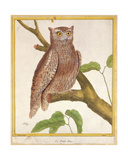 Scops Owl, from 'Histoire Naturelle Des Oiseaux' by Georges De Buffon (1707-88) Published 1777 Giclee Print by Francois Nicolas Martinet