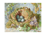 A Nest of Eggs, 1871 Giclee Print by Jabez Bligh