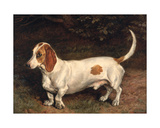 A Favourite Dachshund Giclee Print by Frank Paton