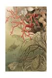 """Red Coral, Plate from """"Brehms Tierleben: Allgemeine Kunde Des Tierreichs"""", Vol.10, P.608,… Giclee Print by German School"""