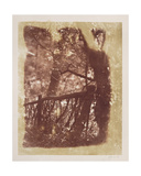 Fence and Trees in Colinton Wood Giclee Print by  David Octavius Hill and Robert Adamson
