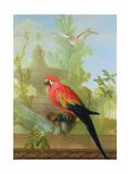 A Macaw and a Dove in an Ornamental Garden, 1772 Reproduction procédé giclée par Gerrit van den Heuvel