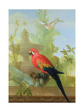 A Macaw and a Dove in an Ornamental Garden, 1772 Giclee Print by Gerrit van den Heuvel