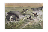 "Bowhead and Killer Whales, Plate from ""Brehms Tierleben: Allgemeine Kunde Des Tierreichs"", Vol.3,… Giclee Print by German School"