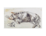 Sleeping Pig Giclee Print by James Ward