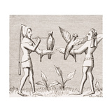 Falconers Dressing their Birds, Reproduction of a Miniature in the 14th Century Manuscript 'Livre… Giclee Print