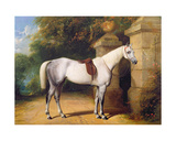 A Grey Horse by Park Gates, 1851 Giclee Print by Henry Barraud