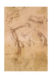 Ms H 184 Fol.202 Studies of Raised Arms, a Wild Cat and a Group of Figures Giclee Print by  Michelangelo Buonarroti
