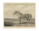 Copenhagen, from 'Celebrated Horses', a Set of Fourteen Racing Prints Published by the Artist,… Giclee Print by James Ward