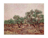 The Olive Pickers, 1888-89 Giclee Print by Vincent van Gogh