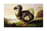 Study of a Dodo Giclee Print by F Hart