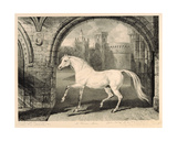 A Persian Horse, from 'Celebrated Horses', a Set of Fourteen Racing Prints Published by the… Giclee Print by James Ward