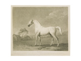 Mambrino, after George Stubbs, 1788 Giclee Print by Charles Howard Hodges