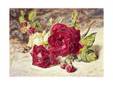 One White and Two Red Roses and Buds Giclee Print by Helen Cordelia Coleman Angell